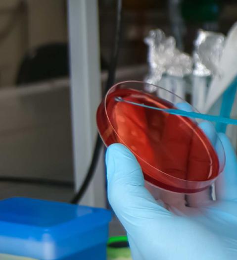Olulisemaid toidupatogeene käsitlev teabematerjal
